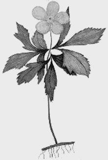 Компьютерный атласопределитель травянистых растений